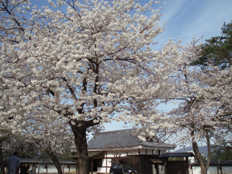 松江城3.jpg